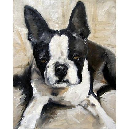 PRINT Boston Terrier Dog