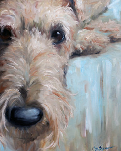 Airedale Blues