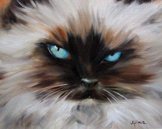 PRINT Himalayan Cat Eyes Kitten