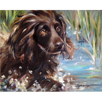 PRINT Boykin Spaniel Swimming Dog Art Print
