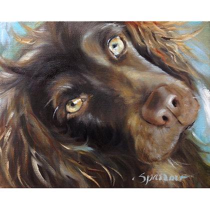 PRINT Boykin Spaniel Dog Art