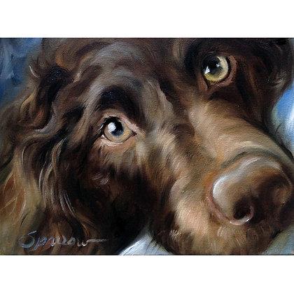 PRINT Boykin Spaniel Dog Face