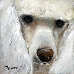 beauty the poodle