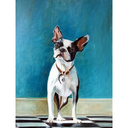 Commissioned Boston Terrier