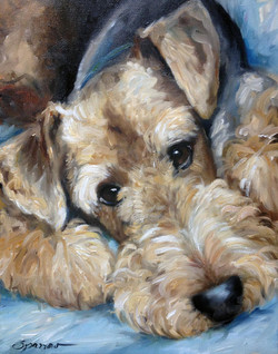 Phineas the Airedale