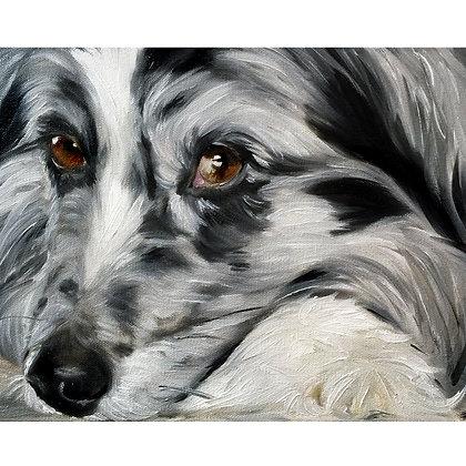 PRINT of Original Australian Shepherd Dog Portrait