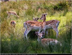 Parc naturel de Boutissaint