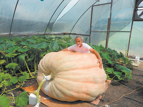 Vesters-pumpkin.jpg