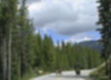 Elk Crossing Grand Lake