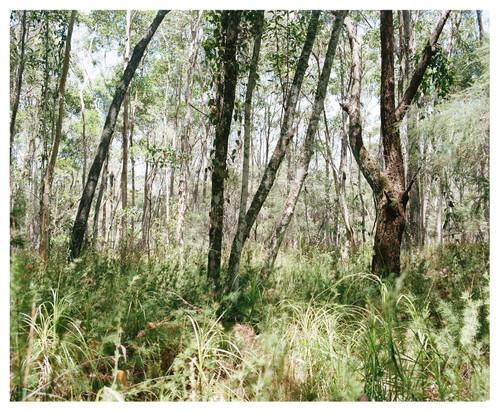 Bush Landscape #1