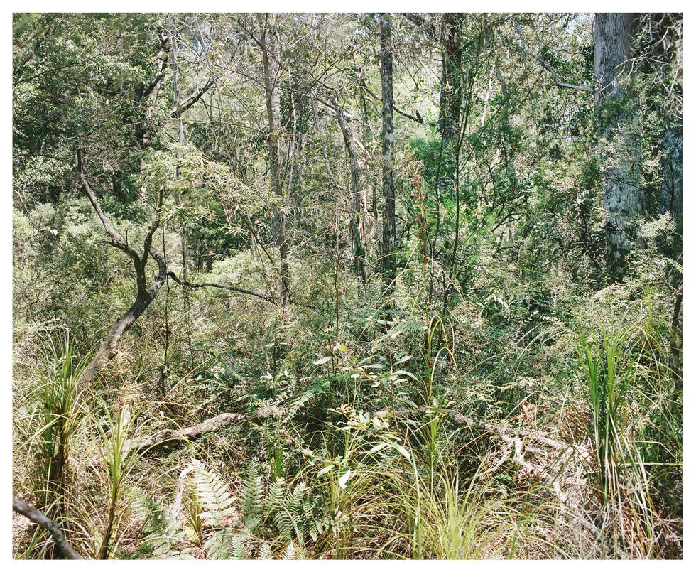 Bush Landscape #2