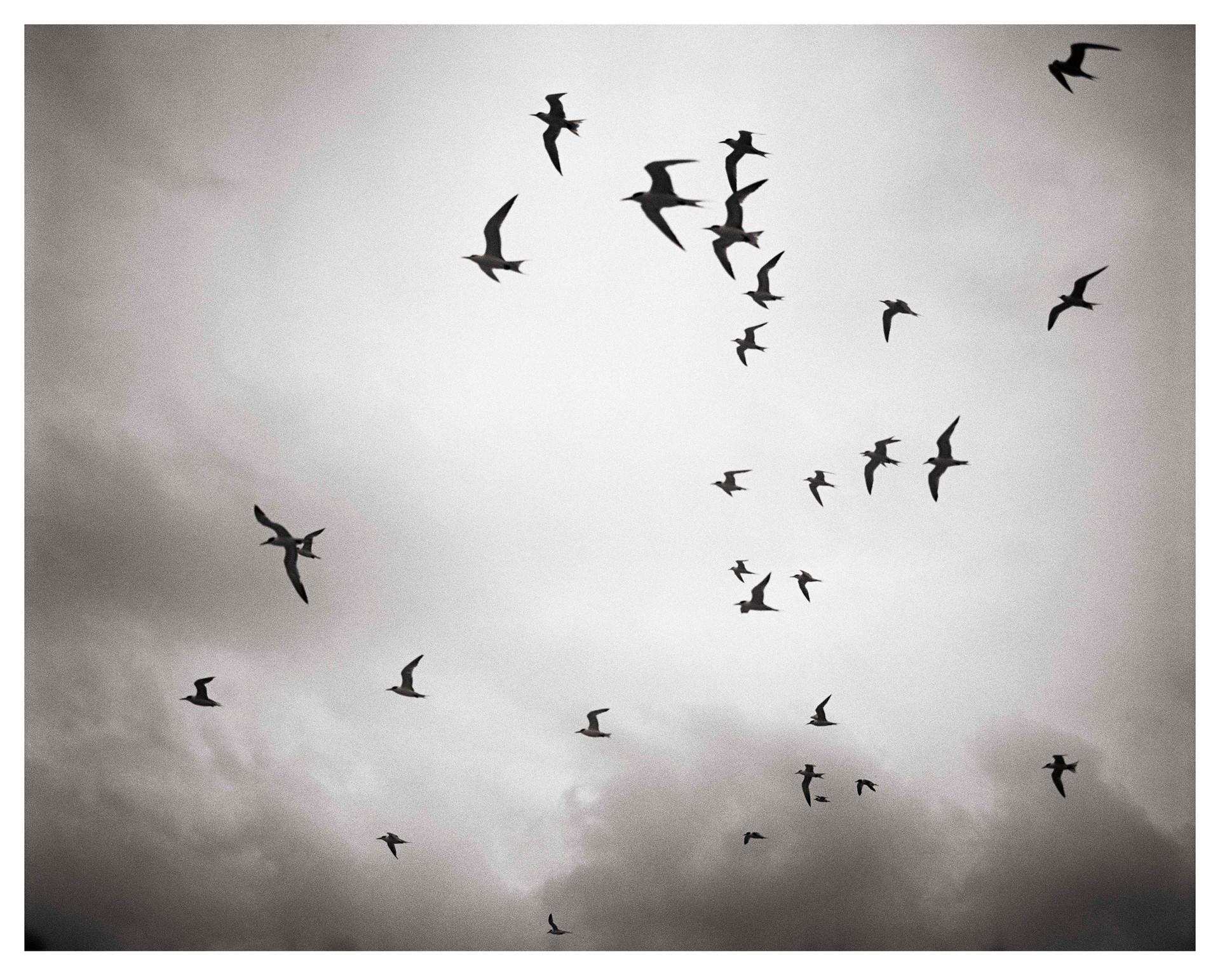 Bondi Birds