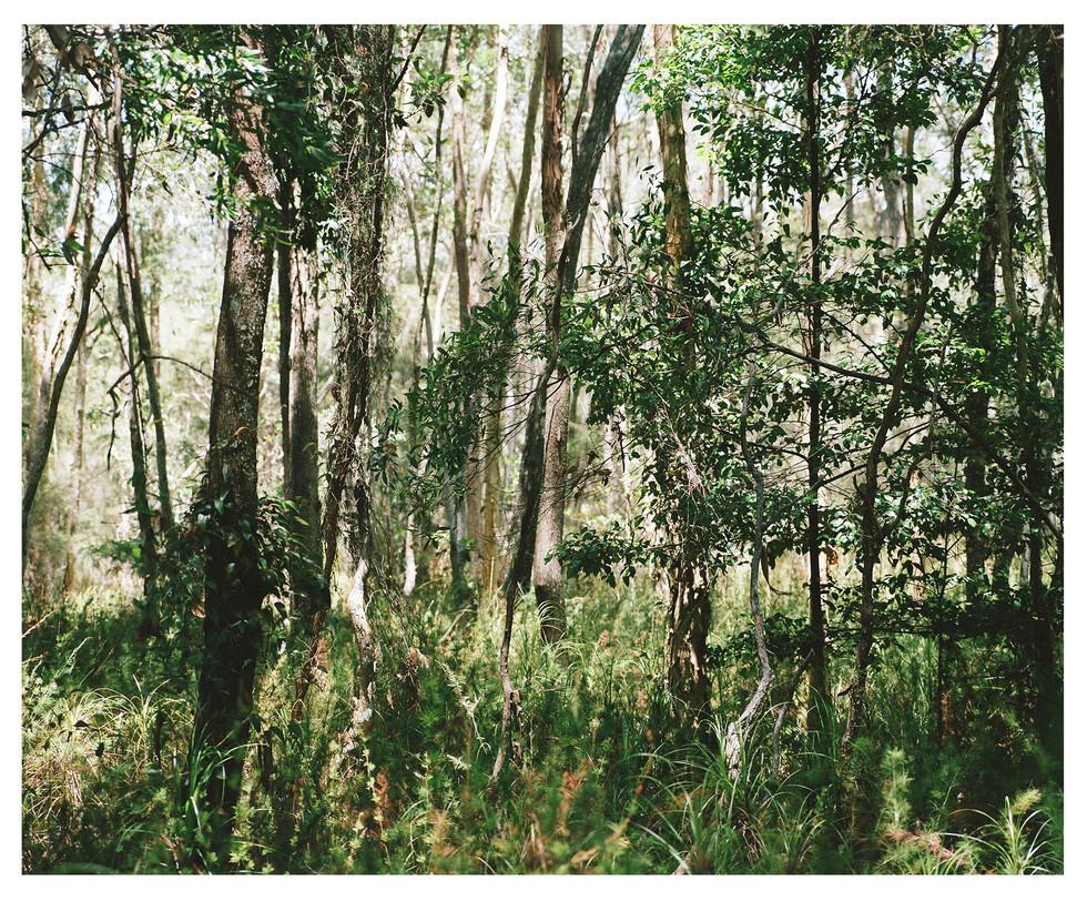 Bush Landscape #3