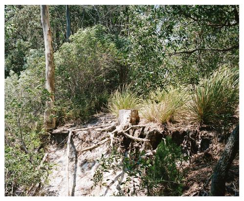 Bush Landscape #4