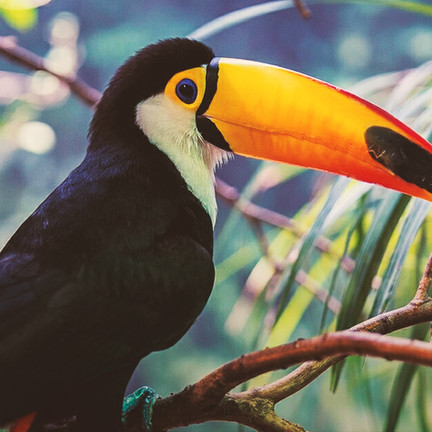 MAKE A CHANGE! RAISE $5900 FOR THE CURU NATIONAL WILDLIFE REFUGE IN COSTA RICA.