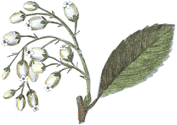 Image of leaves and flowers