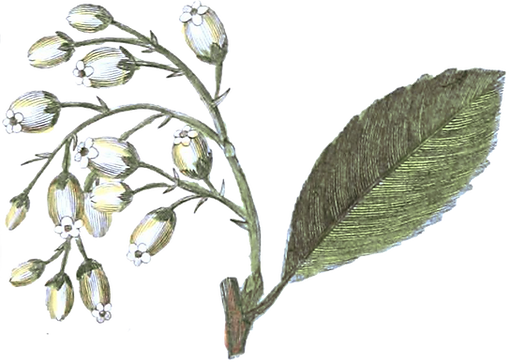 flowers_nature_herb_Lily_Bouquet_