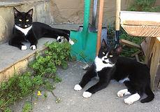 Sage & Merlin
