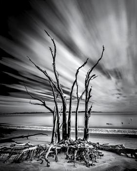 Crawling Tree Bones, Big Talbot Island, FL