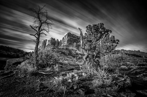 Cathedral Rocks Trail 1.jpg