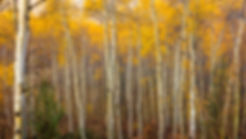 2016_09_Tetons_0805-Edit.jpg