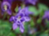 Jane's Flower Macro.jpg