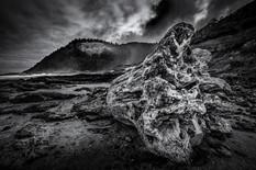 Pacific Driftwood #1.jpg