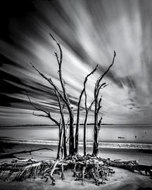 Crawling Tree Bones, Big Talbot Island,