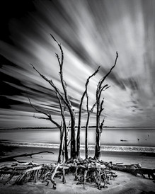 Crawling Tree Bones, Big Talbot Island,