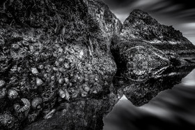 Marine Life and Sea Stack Reflections