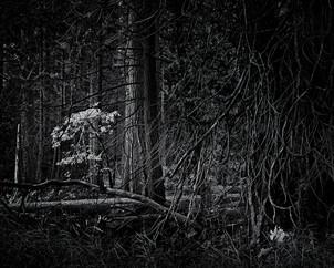 091027Yosemity Forest.jpg