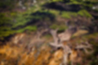 2011_01_Big Sur_0678.jpg
