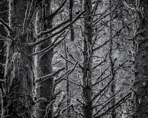 Haceta Pines