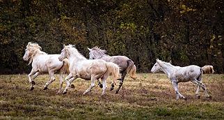 2015_10_Wild Horses Shannon Co_0042-Edit