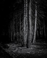 Bear Lake Pines
