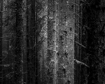 Coastal Pines-.jpg