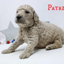 patriot_2wk.jpeg