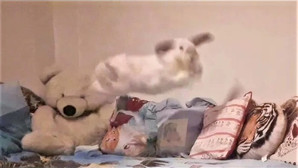Squidge's Bedtime