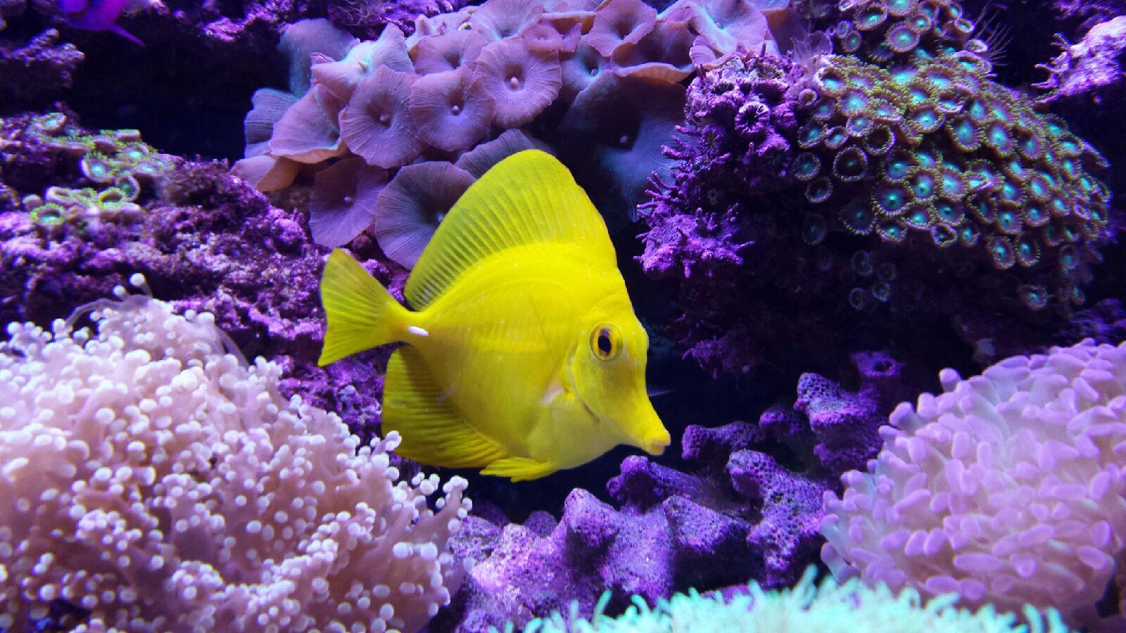Nevada Aquatics Las Vegas Aquarium