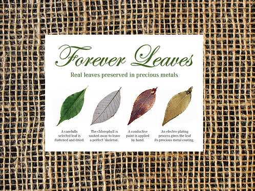 Forever Leaves Product Brochure