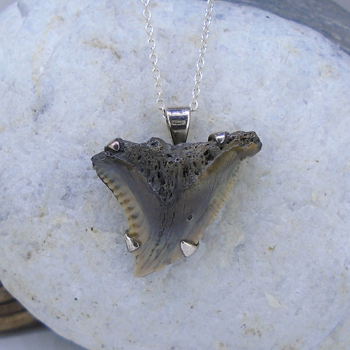 Fossilised Shark Tooth Sterling Silver Pendant