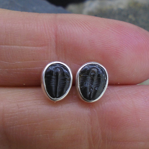 Tiny Trilobite Sterling Silver Stud Earrings