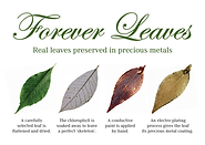 forever leaves pos.png