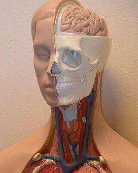 Biomedical Courses.jpg