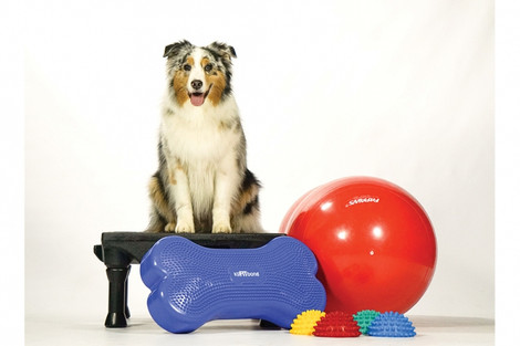 Agility kit for dogs for outdoor play with your dog