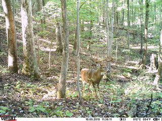 5 Tips To Obtaining Better Trail Cam Photos