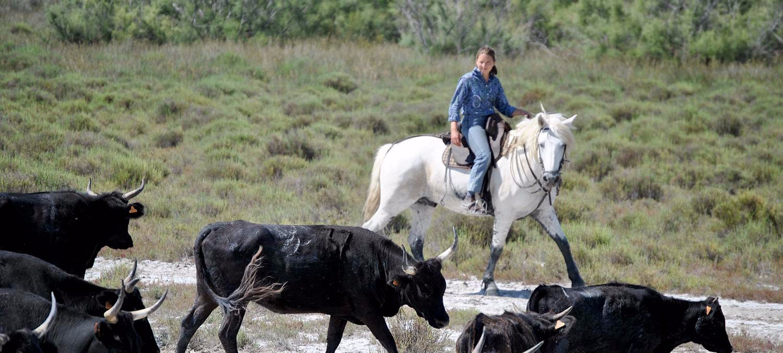Tri de taureau Manade Raynaud