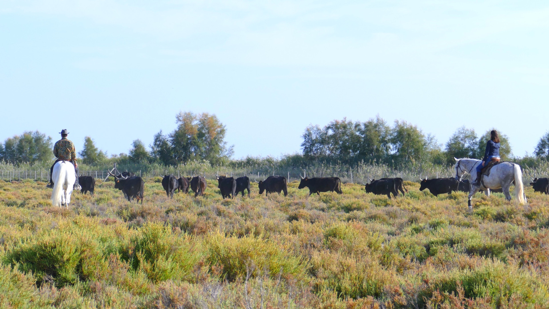 Apprentissage tri de taureau