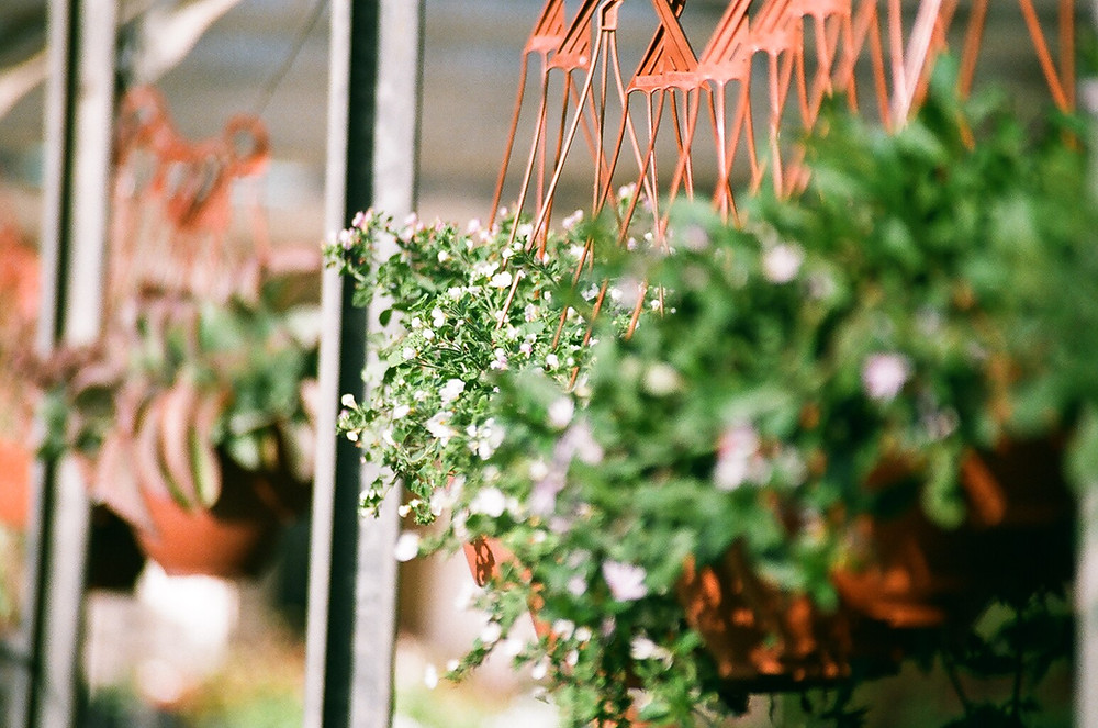 actual hanging basket will vary