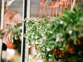 Pflanzen auswählen